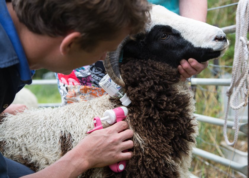 Sheep&Goats - Vaccination Programs